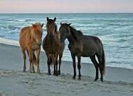 Picture of  Chincoteague Island